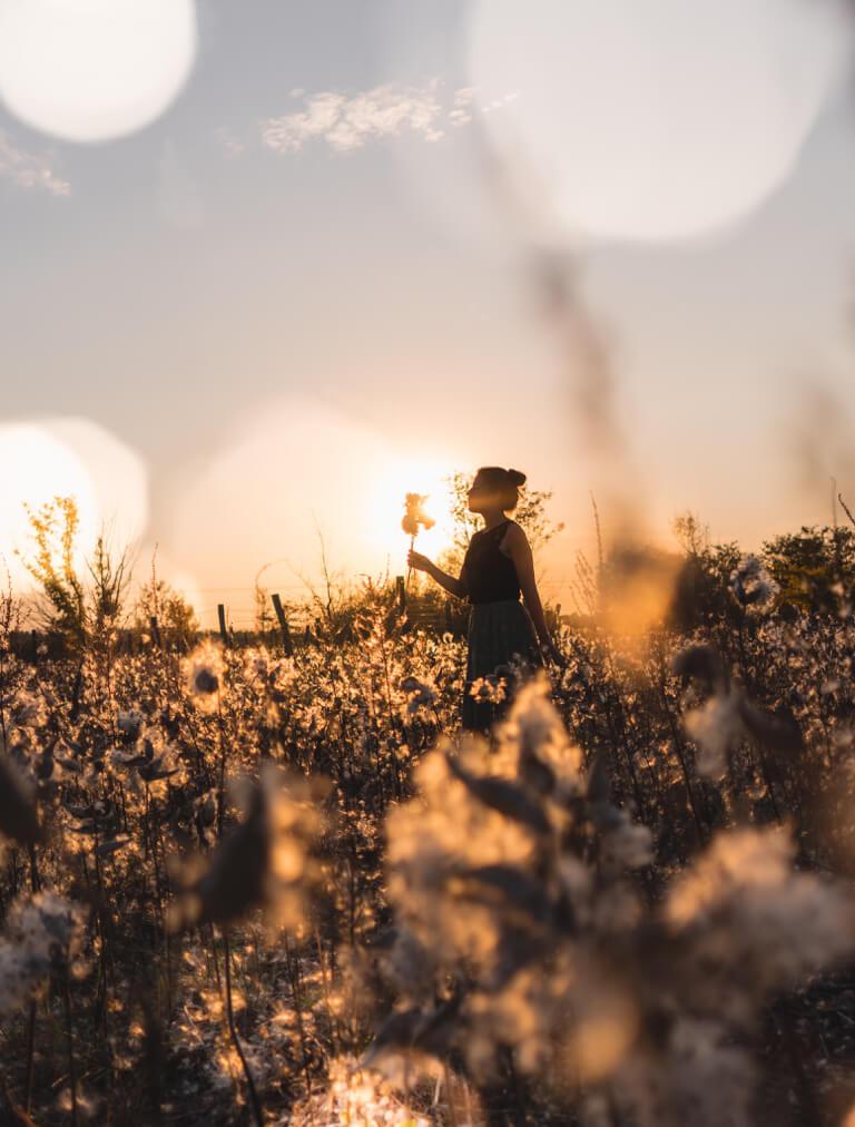 Ungarn Puszta Seidenpflanze Feld