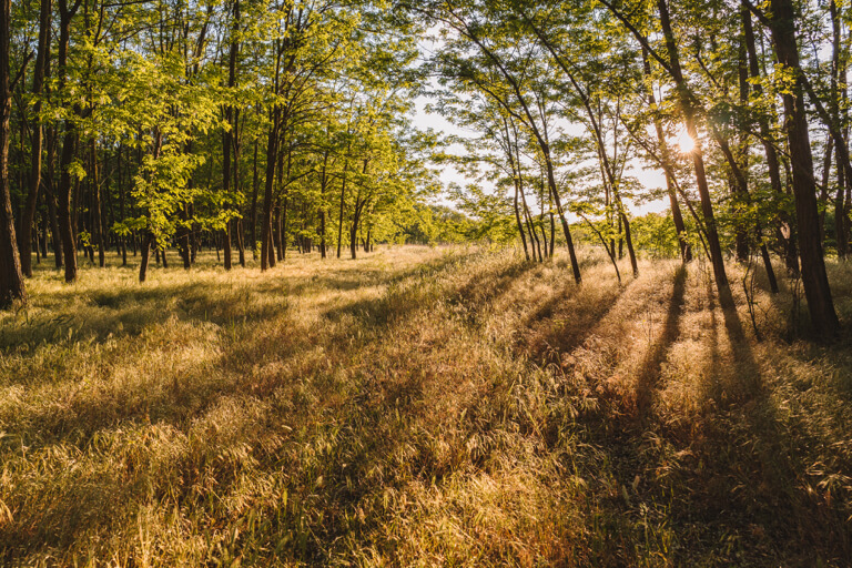 Ungarn Puszta Wald Robinie-2