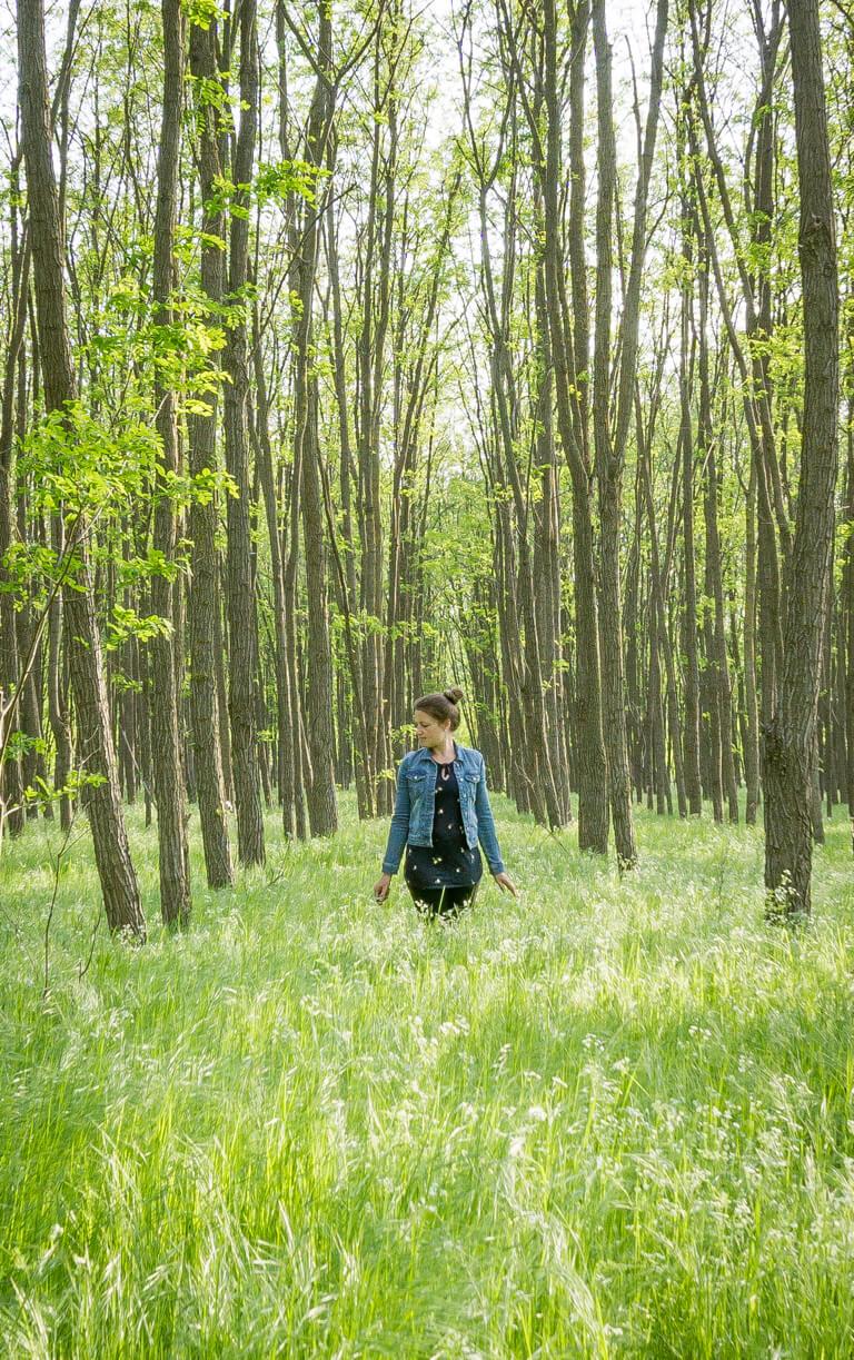 Ungarn Puszta Wald Robinie