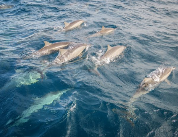 Wilde Delfine Malediven Inseln