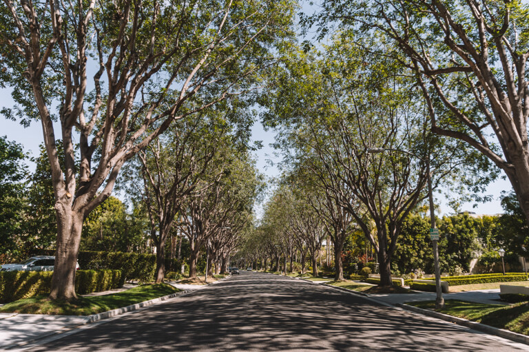 Beverly Hills Baeume
