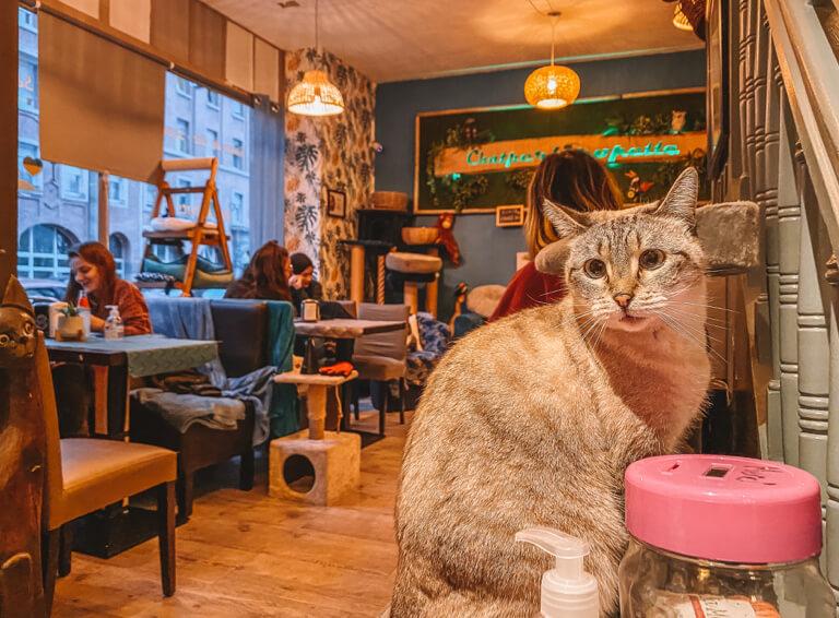 Katzen Cafe Chatperlipopette Strassburg