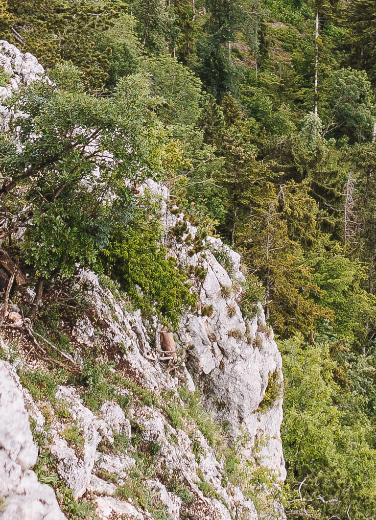 Naturpark Hohe Wand Felsenpfad Niederoesterreich Alpensteinbock