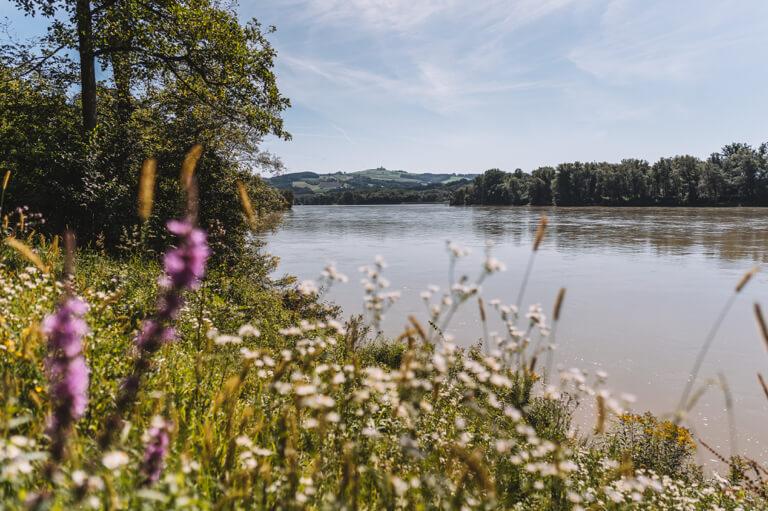 Donau Radweg Grein an der Donau Oberoesterreich