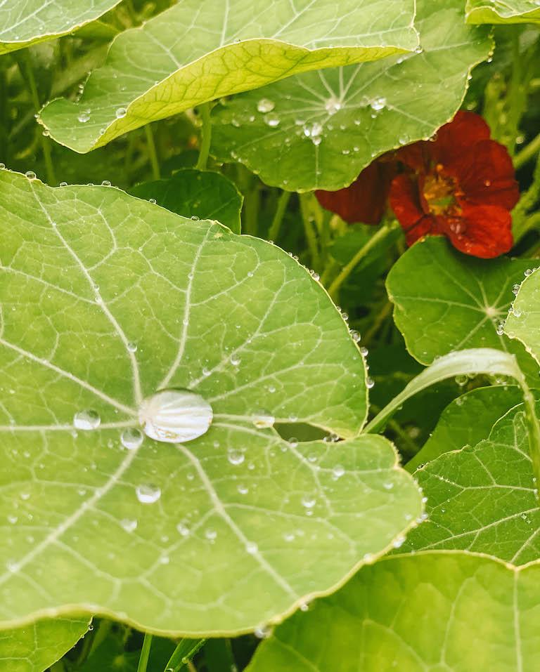 Garten Sonnentor