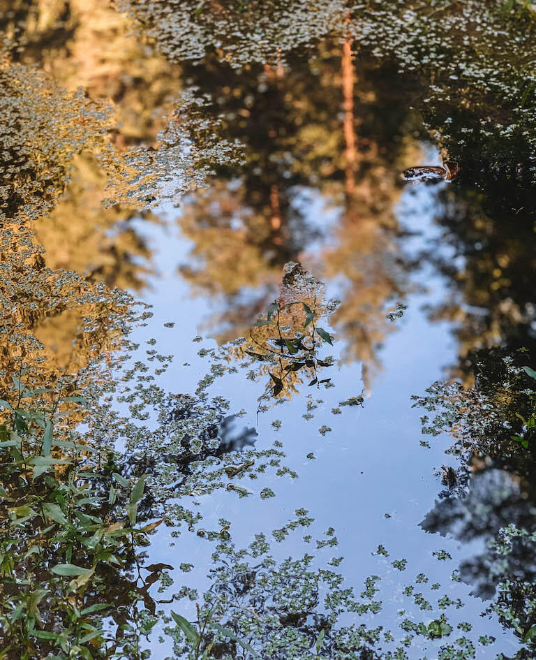 Spiegelung Wald