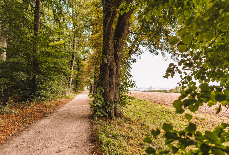 Ulmer Hoehenweg Panorama