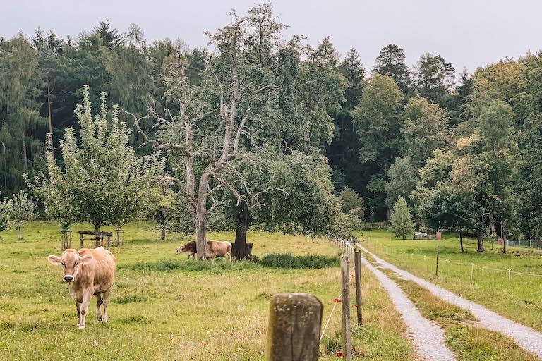 Weingarten Spaziergang