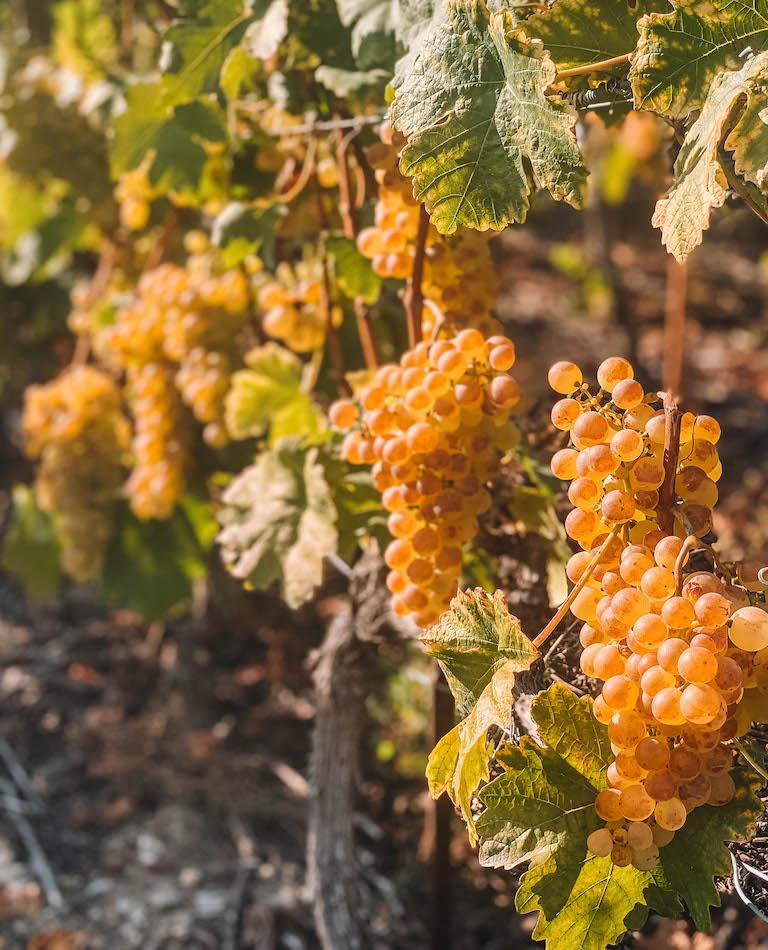 Wein Sion