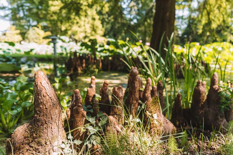 Botanischer Garten Luftwurzeln