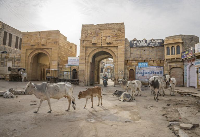 Indien Sehenswuerdigkeiten Jaisalmer Rajasthan