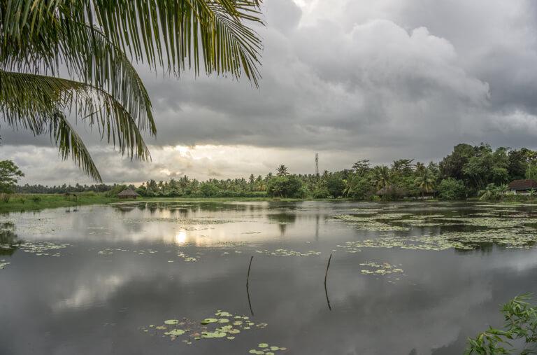 Kerala Backwaters Coconut Lagoon Indien Sueden