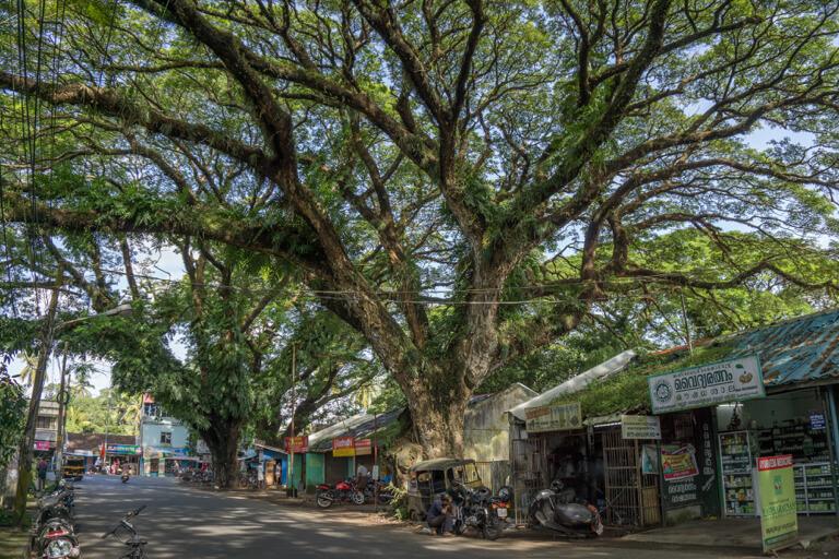Kochi Suedindien Kerala