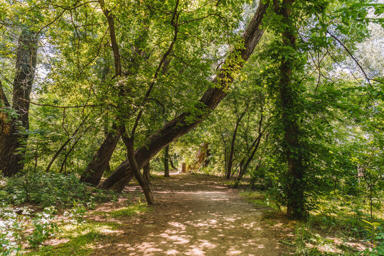 Wanderweg Rotary Trail