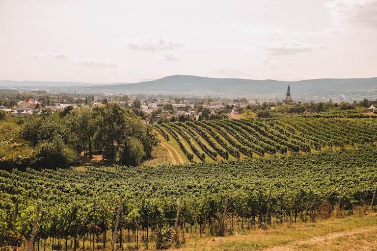 Weinberge Baden bei Wien