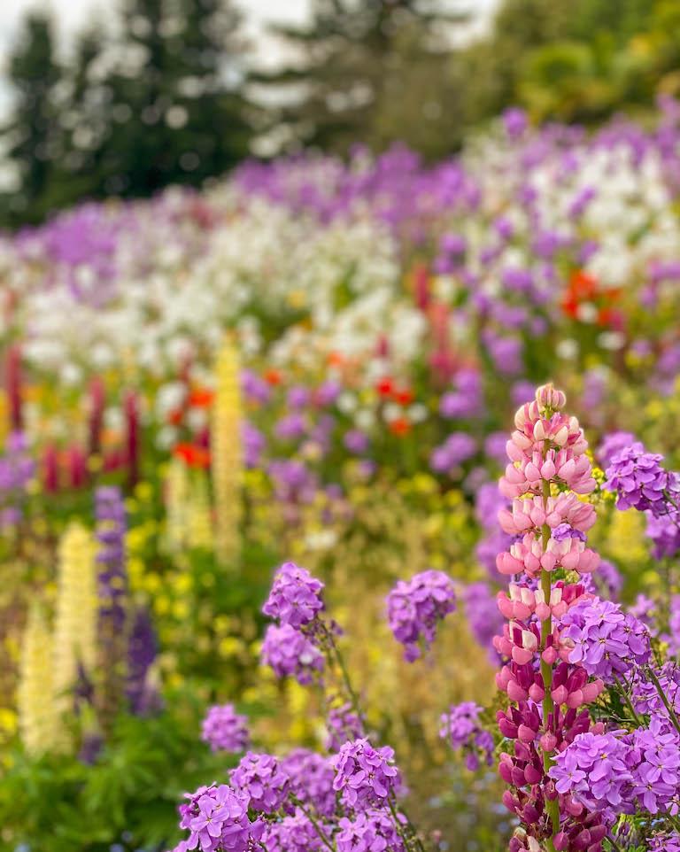 Blumen Insel Mainau