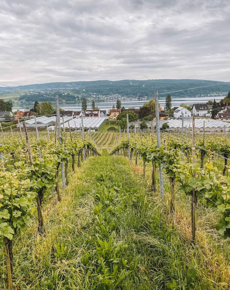 Bodensee Sehenswuerdigkeiten Insel Reichenau