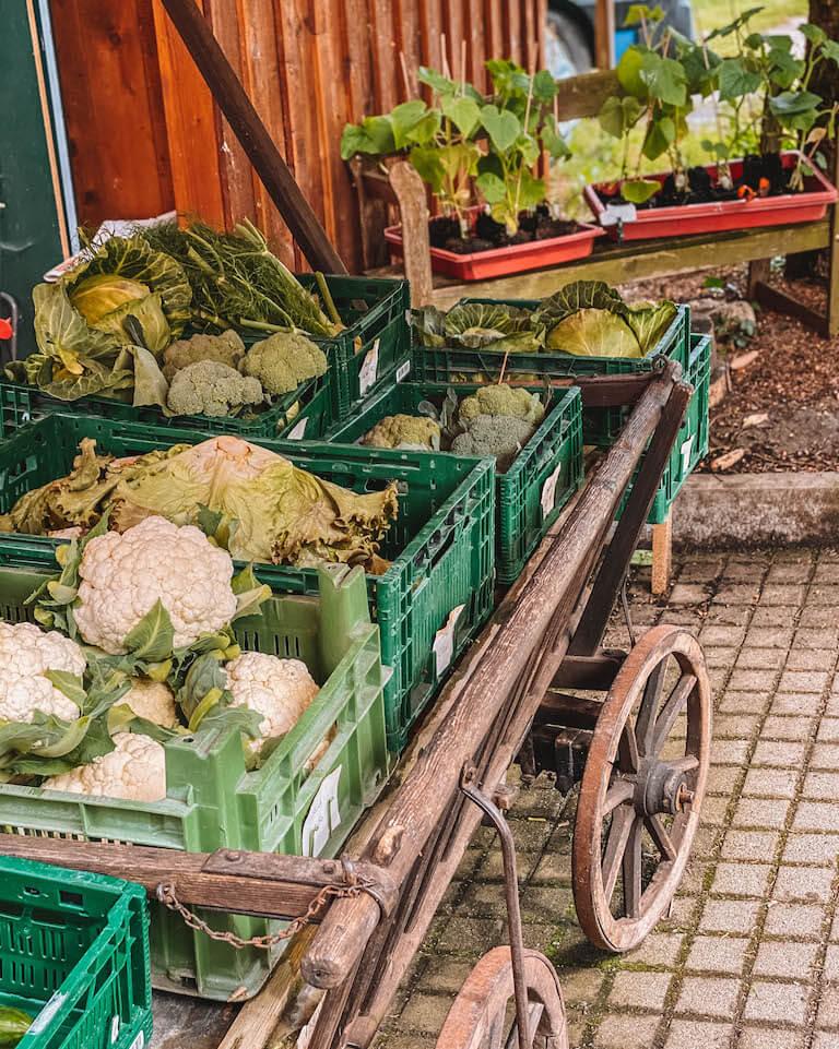Gemüse Insel Reichenau Bodensee