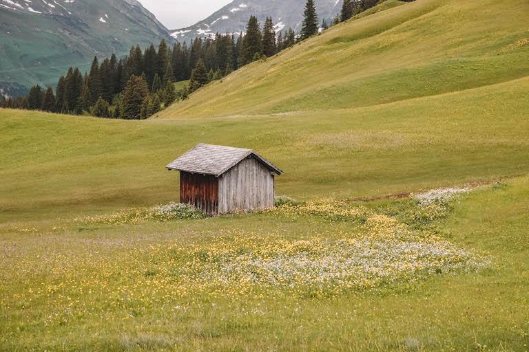 Lech am Arlberg Almwiese