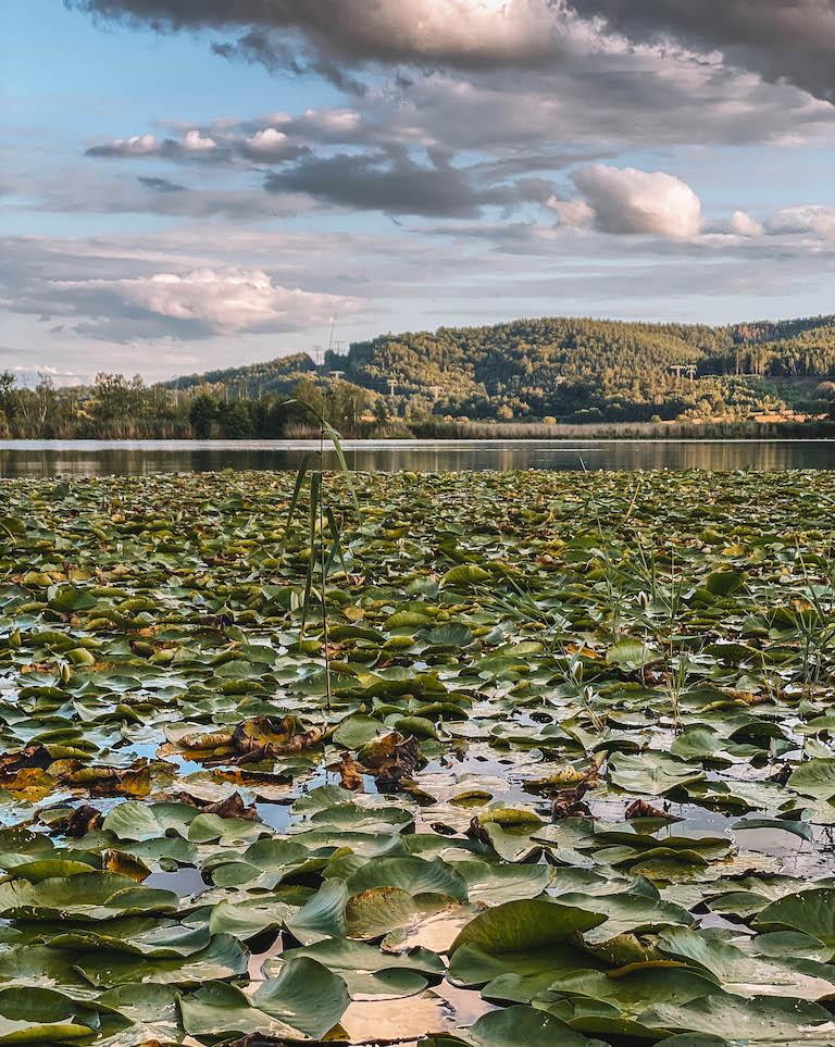 Breitunger Seen Seerosen
