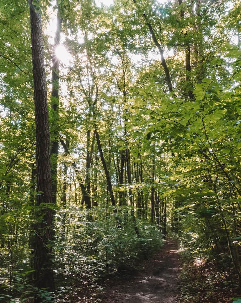 Der Meininger Wanderung Wald