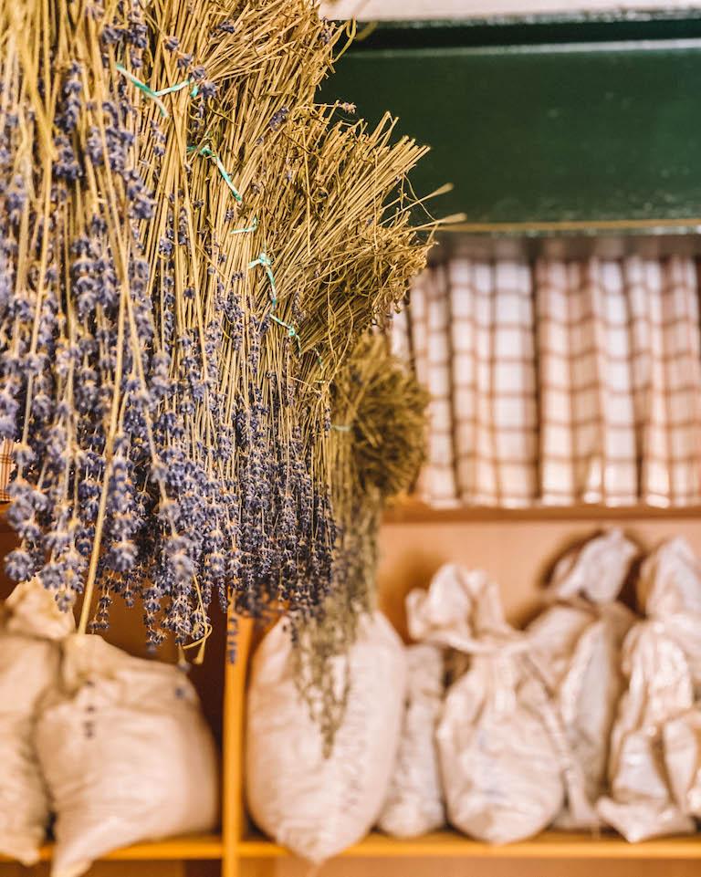 Hollerbacher Kraeutergarten Lavendel