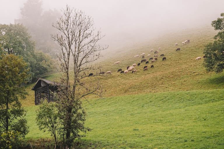 Tauernlamm Salzburger Land